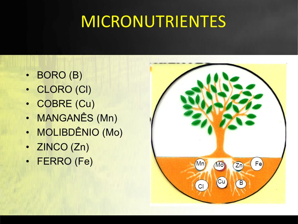 BORO (B) CLORO (Cl) COBRE (Cu) MANGANÊS (Mn) MOLIBDÊNIO (Mo) ZINCO (Zn) FERRO (Fe) Fe B Cl Cu Mn Mo Zn