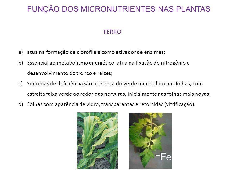 FUNÇÃO DOS MICRONUTRIENTES NAS PLANTAS FERRO a)atua na formação da clorofila e como ativador de enzimas; b)Essencial ao metabolismo energético, atua n
