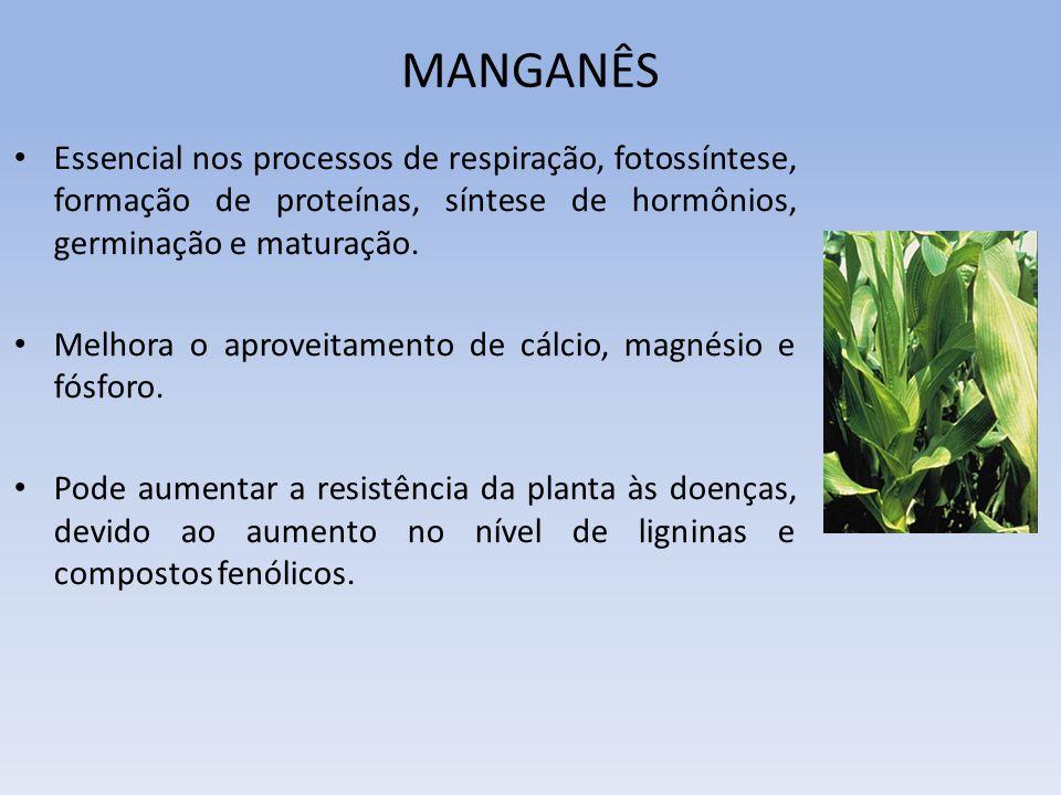 MANGANÊS Essencial nos processos de respiração, fotossíntese, formação de proteínas, síntese de hormônios, germinação e maturação. Melhora o aproveita
