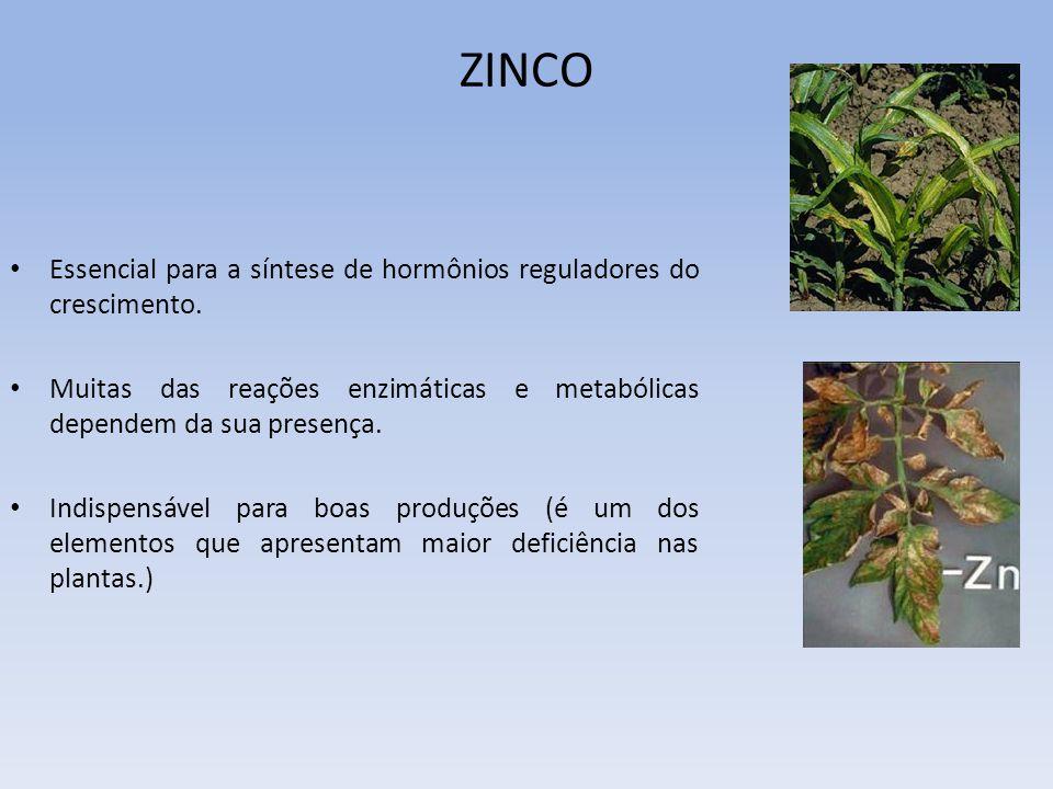 ZINCO Essencial para a síntese de hormônios reguladores do crescimento. Muitas das reações enzimáticas e metabólicas dependem da sua presença. Indispe
