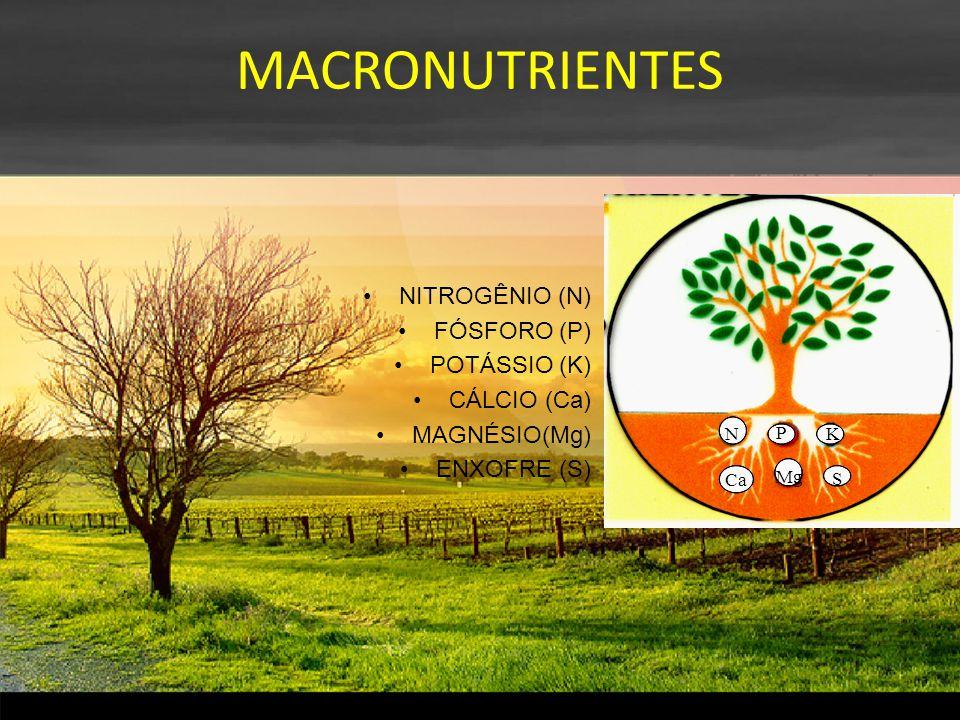 MACRONUTRIENTES NITROGÊNIO (N) FÓSFORO (P) POTÁSSIO (K) CÁLCIO (Ca) MAGNÉSIO(Mg) ENXOFRE (S) N P K Ca Mg S