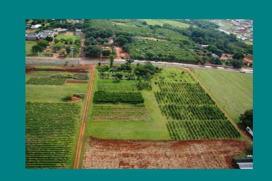 Coleta e Identificação Material vegetal Extrato orgânico Material vegetal Extratohidroalcoólico diclorometano etanol 70% Teste de atividade segundacoleta Fracionamento dos extratos ativos