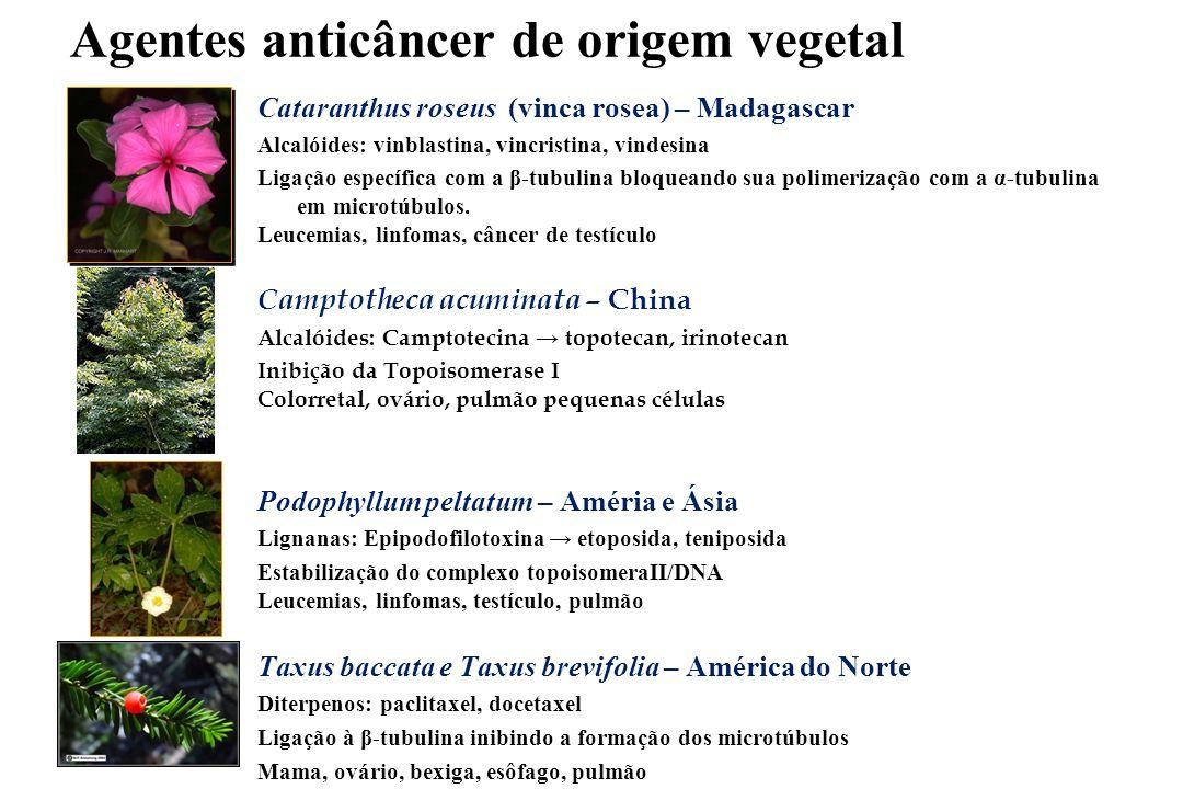 Resultados: úlcera gástrica,mucosite,cicatrização - - Rosmarinus offinalis, alecrim, citoproteção - -  grupos sulfidrila não protéicos da mucosa - - Mikania laevigata, guaco, ↓ secreção HCl - -bloqueio secreção pelo parassimpático - - Artemisia annua, artemísia, citoproteção - - dihidro-epideoxiartenuína b, deoxiartemisinina - - Maytenus ilicifolia, espinheira santa, citoproteção - - Proteínas do soro de leite, citoproteção, mucosite (FEA, Madrid) - -  produção de glutationa,  produção de muco - - Arrabidaea chica, crajiru: anti-ulcerogênica,cicatrizante - -  proliferação fibroblastos,  colágeno