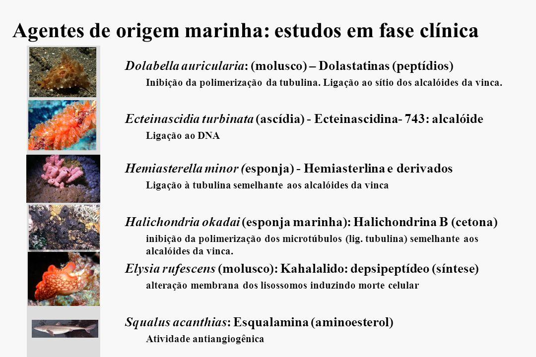 Agentes de origem marinha: estudos em fase clínica l l Dolabella auricularia: (molusco) – Dolastatinas (peptídios) – –Inibição da polimerização da tub