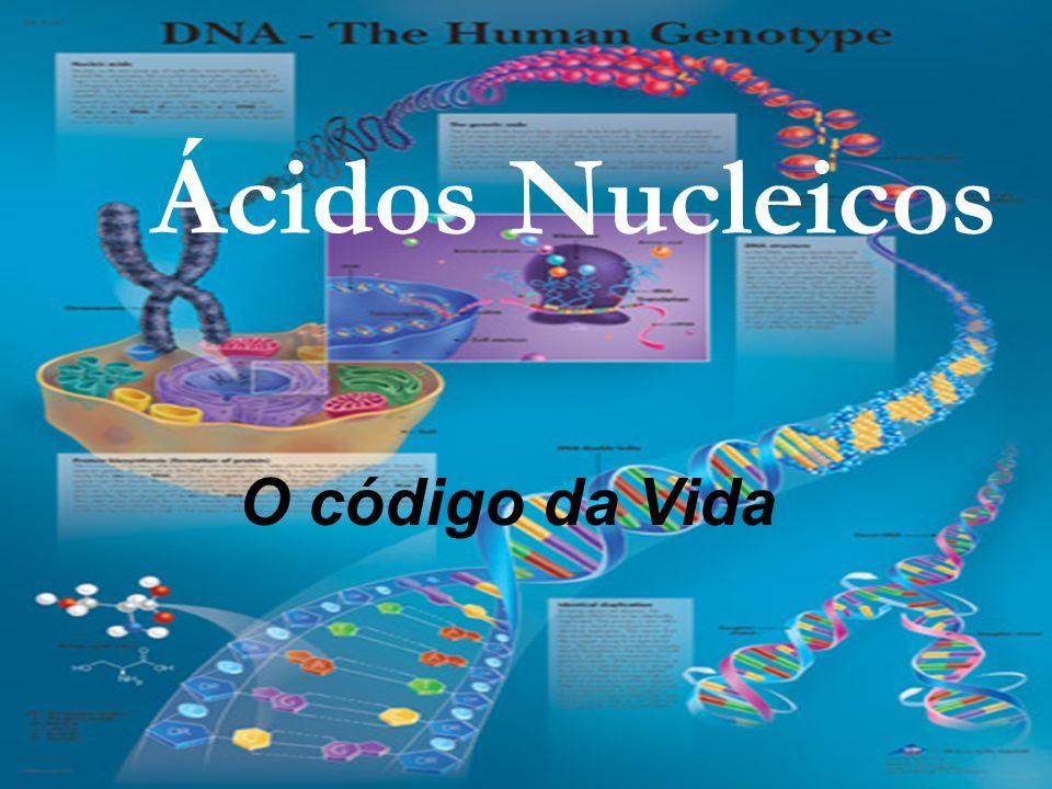 Ácidos Nucleicos O código da Vida