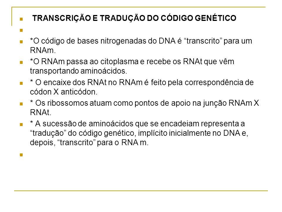 TRANSCRIÇÃO E TRADUÇÃO DO CÓDIGO GENÉTICO *O código de bases nitrogenadas do DNA é transcrito para um RNAm.