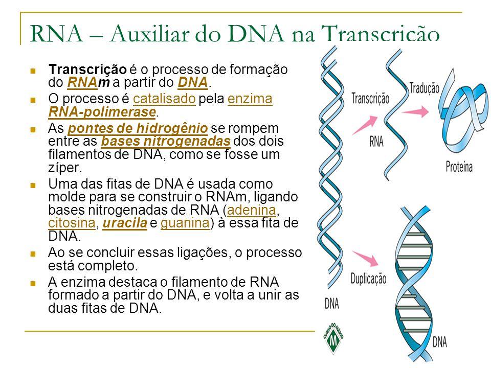 RNA – Auxiliar do DNA na Transcrição Transcrição é o processo de formação do RNAm a partir do DNA.RNADNA O processo é catalisado pela enzima RNA-polimerase.catalisadoenzima RNA-polimerase As pontes de hidrogênio se rompem entre as bases nitrogenadas dos dois filamentos de DNA, como se fosse um zíper.pontes de hidrogêniobases nitrogenadas Uma das fitas de DNA é usada como molde para se construir o RNAm, ligando bases nitrogenadas de RNA (adenina, citosina, uracila e guanina) à essa fita de DNA.adenina citosinauracilaguanina Ao se concluir essas ligações, o processo está completo.