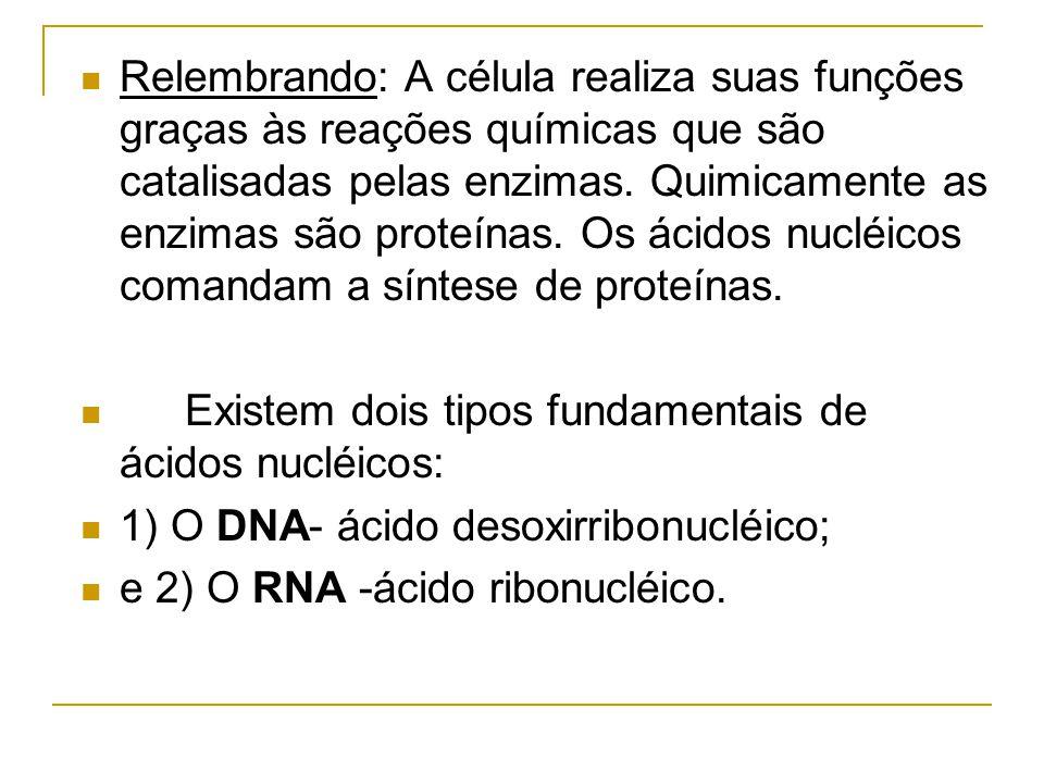 Relembrando: A célula realiza suas funções graças às reações químicas que são catalisadas pelas enzimas.
