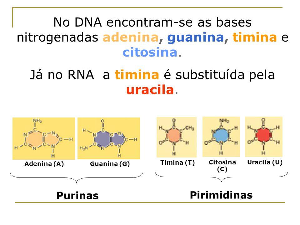 No DNA encontram-se as bases nitrogenadas adenina, guanina, timina e citosina.