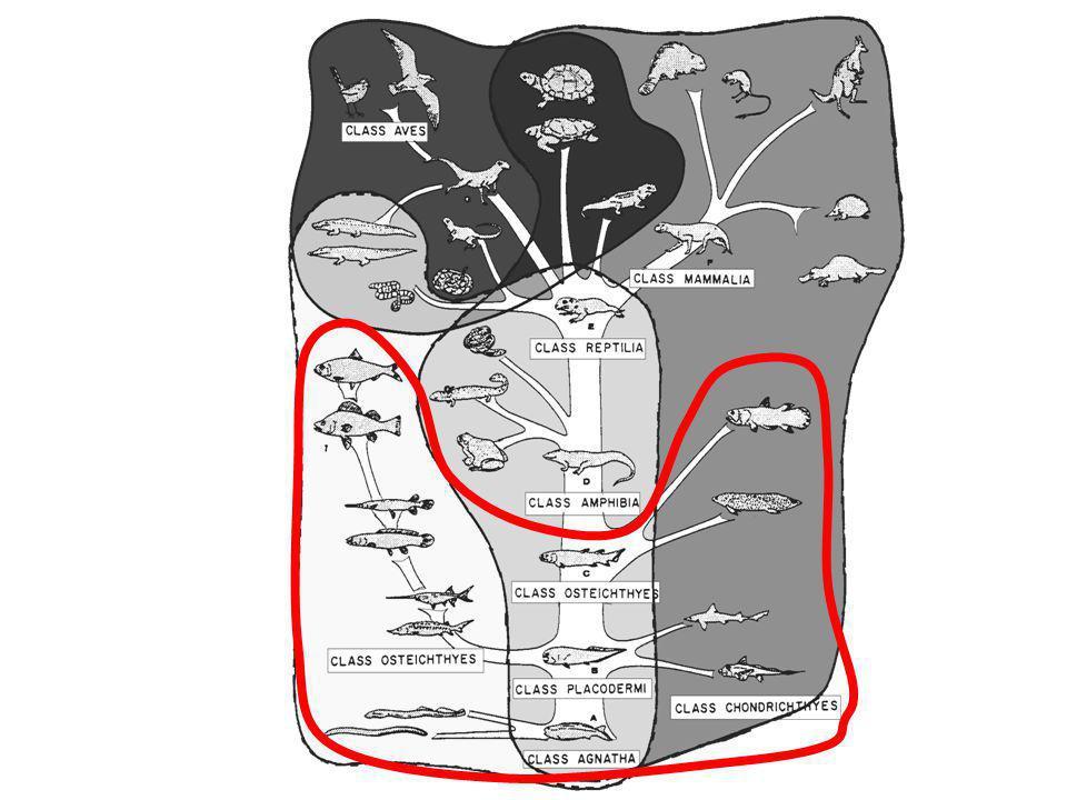 Regiões do corpo Cabeça TroncoCauda