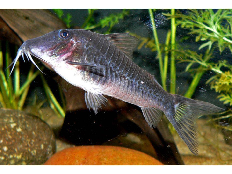 ESCAMAS As escamas dos peixes oferecem proteção para o corpo e auxiliam na natação.