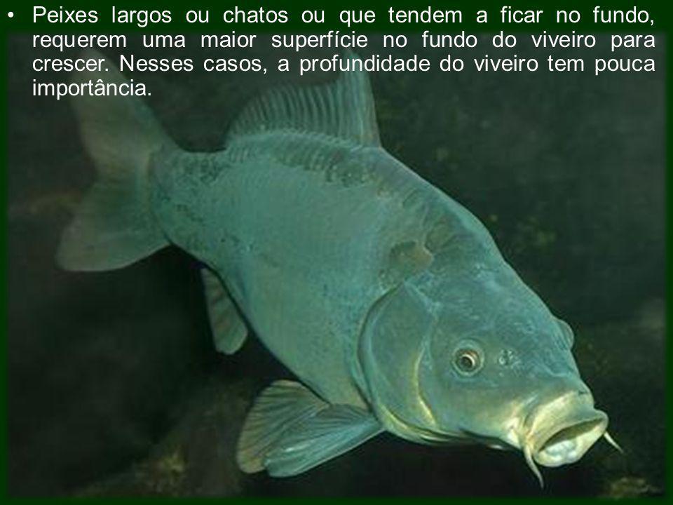 Peixes largos ou chatos ou que tendem a ficar no fundo, requerem uma maior superfície no fundo do viveiro para crescer. Nesses casos, a profundidade d