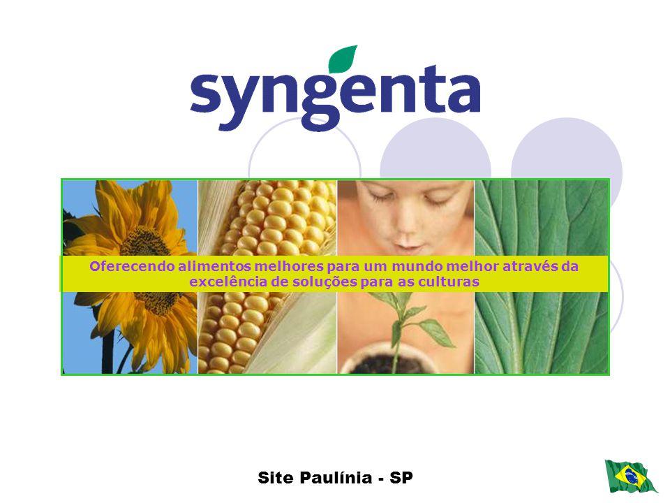 Oferecendo alimentos melhores para um mundo melhor através da excelência de soluções para as culturas Site Paulínia - SP