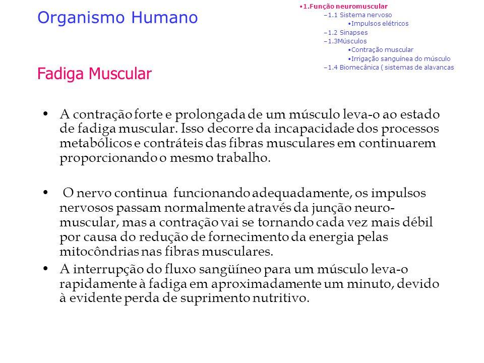 Organismo Humano 1.Função neuromuscular –1.1 Sistema nervoso Impulsos elétricos –1.2 Sinapses –1.3Músculos Contração muscular Irrigação sanguínea do m