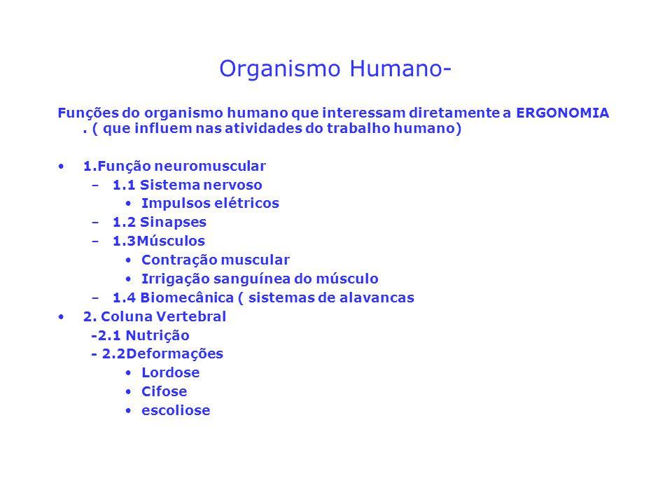 Organismo Humano- Funções do organismo humano que interessam diretamente a ERGONOMIA. ( que influem nas atividades do trabalho humano) 1.Função neurom