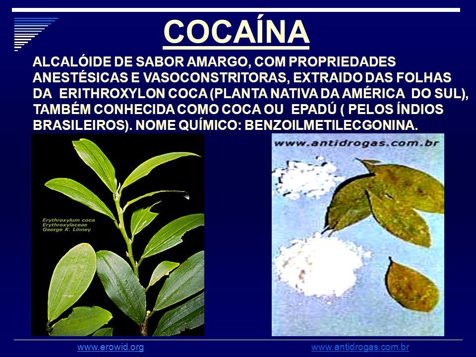COCAÍNA ALCALÓIDE DE SABOR AMARGO, COM PROPRIEDADES ANESTÉSICAS E VASOCONSTRITORAS, EXTRAIDO DAS FOLHAS DA ERITHROXYLON COCA (PLANTA NATIVA DA AMÉRICA