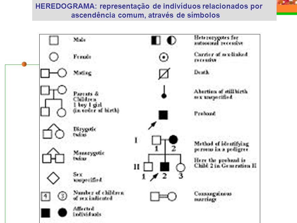HEREDOGRAMA: representação de indivíduos relacionados por ascendência comum, através de símbolos