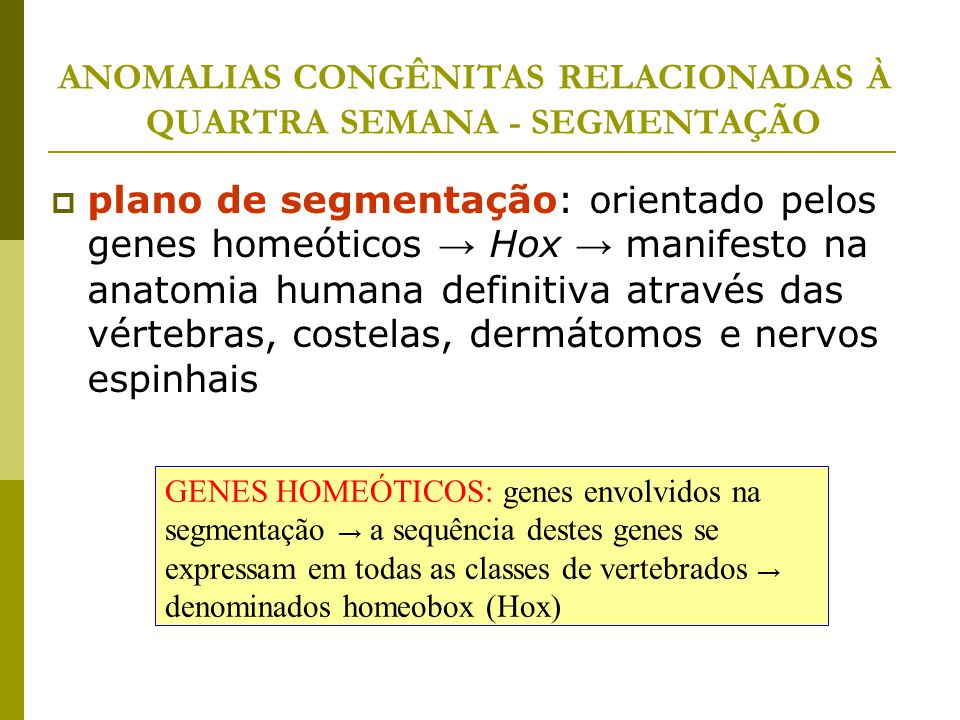 ANOMALIAS CONGÊNITAS RELACIONADAS À QUARTRA SEMANA - SEGMENTAÇÃO  plano de segmentação: orientado pelos genes homeóticos → Hox → manifesto na anatomi