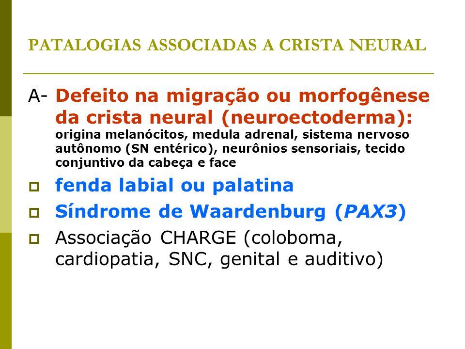 PATALOGIAS ASSOCIADAS A CRISTA NEURAL A- Defeito na migração ou morfogênese da crista neural (neuroectoderma): origina melanócitos, medula adrenal, si