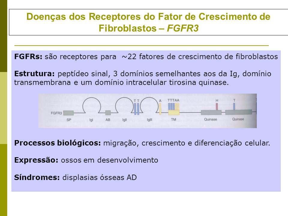 Doenças dos Receptores do Fator de Crescimento de Fibroblastos – FGFR3 FGFRs: são receptores para ~22 fatores de crescimento de fibroblastos Estrutura