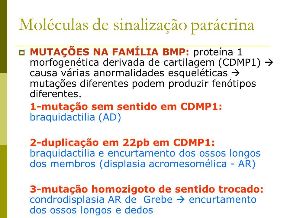 Moléculas de sinalização parácrina  MUTAÇÕES NA FAMÍLIA BMP: proteína 1 morfogenética derivada de cartilagem (CDMP1)  causa várias anormalidades esq