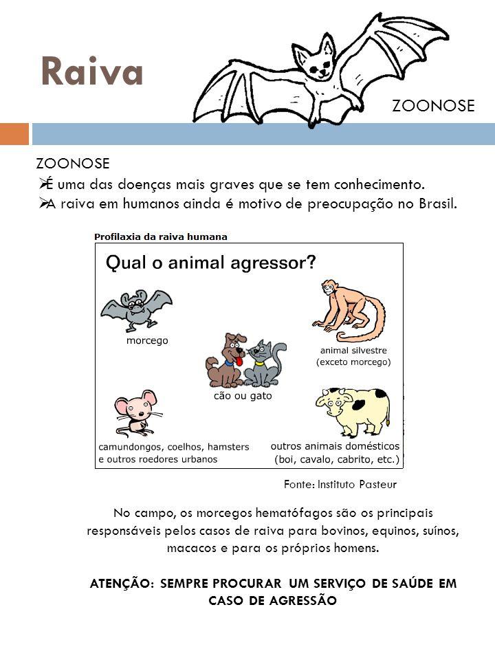 Raiva ZOONOSE  É uma das doenças mais graves que se tem conhecimento.  A raiva em humanos ainda é motivo de preocupação no Brasil. Fonte: Instituto