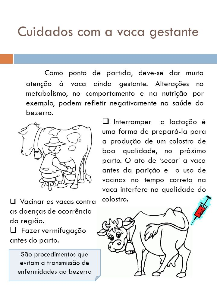 Cuidados com a vaca gestante Como ponto de partida, deve-se dar muita atenção à vaca ainda gestante. Alterações no metabolismo, no comportamento e na