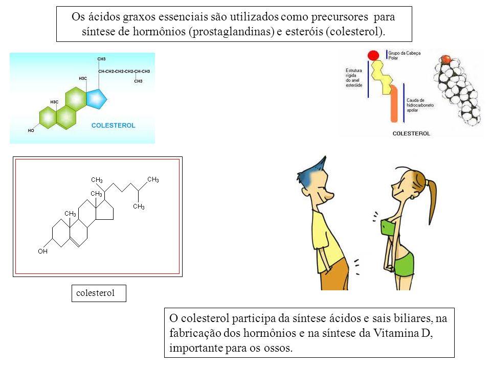 Os ácidos graxos essenciais são utilizados como precursores para síntese de hormônios (prostaglandinas) e esteróis (colesterol). colesterol O colester