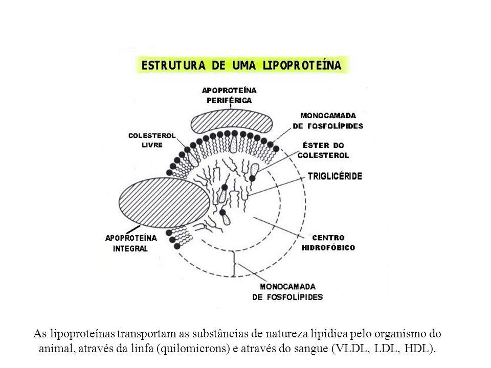 As lipoproteínas transportam as substâncias de natureza lipídica pelo organismo do animal, através da linfa (quilomicrons) e através do sangue (VLDL,