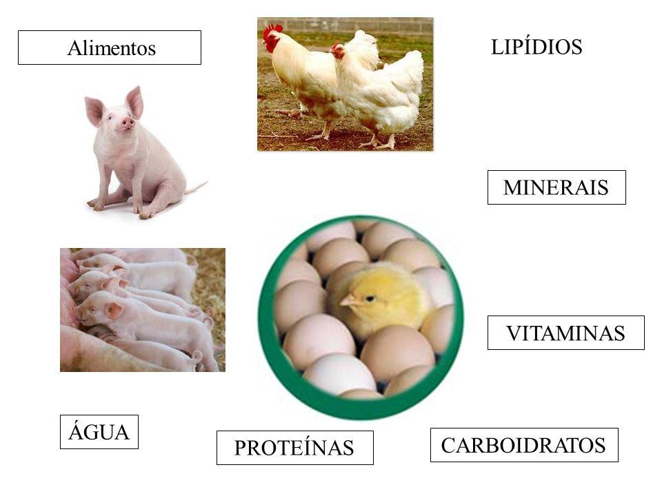 Alimentos ÁGUA PROTEÍNAS CARBOIDRATOS LIPÍDIOS MINERAIS VITAMINAS