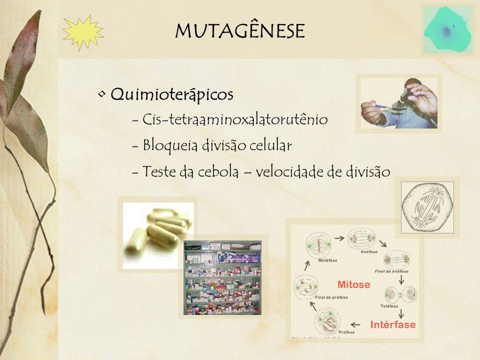 MUTAGÊNESE Quimioterápicos - Cis-tetraaminoxalatorutênio - Bloqueia divisão celular - Teste da cebola – velocidade de divisão