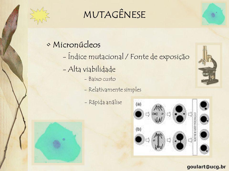 MUTAGÊNESE Micronúcleos - Índice mutacional / Fonte de exposição - Alta viabilidade - Baixo custo - Relativamente simples - Rápida análise goulart@ucg