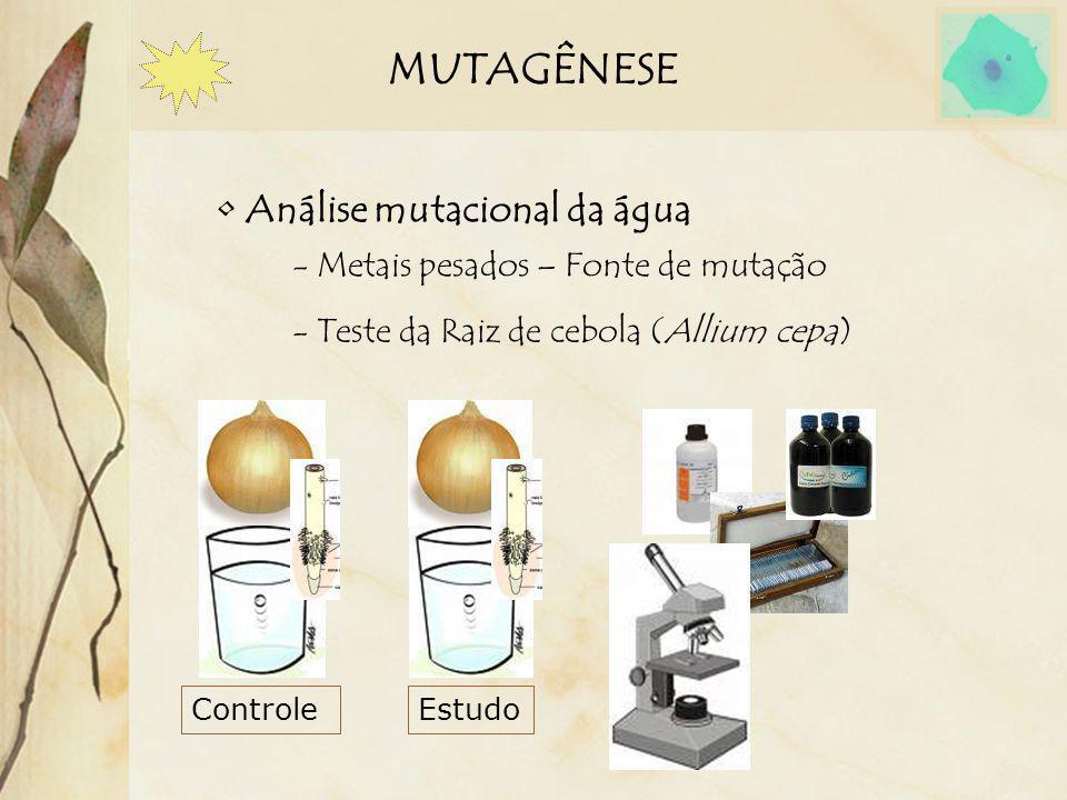 MUTAGÊNESE Análise mutacional da água - Metais pesados – Fonte de mutação - Teste da Raiz de cebola (Allium cepa) ControleEstudo