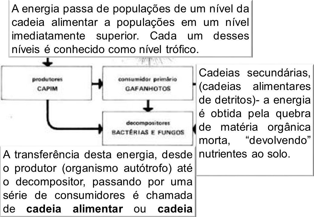 A transferência desta energia, desde o produtor (organismo autótrofo) até o decompositor, passando por uma série de consumidores é chamada de cadeia alimentar ou cadeia trófica.