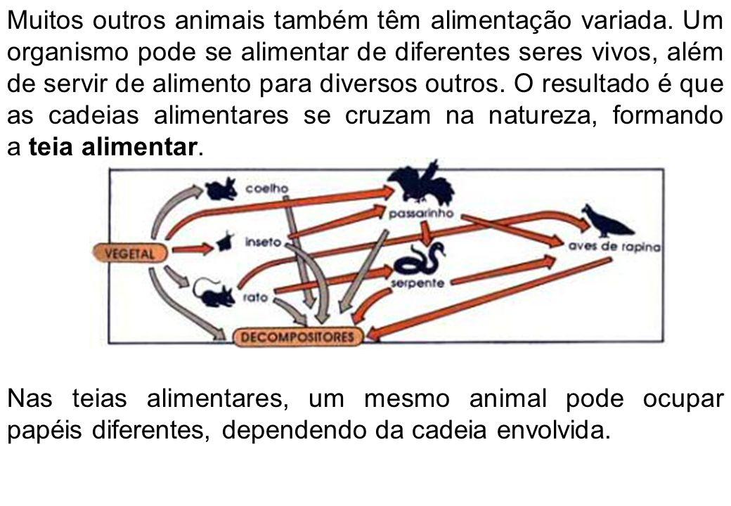 Muitos outros animais também têm alimentação variada.