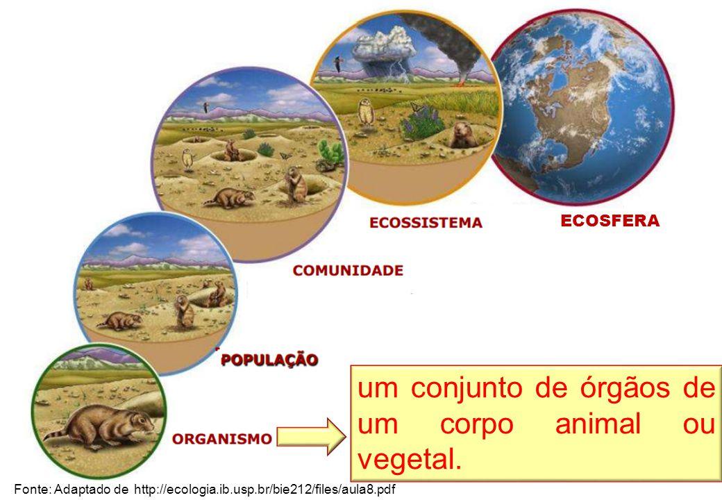 Fonte: Adaptado de http://ecologia.ib.usp.br/bie212/files/aula8.pdf um conjunto de órgãos de um corpo animal ou vegetal.