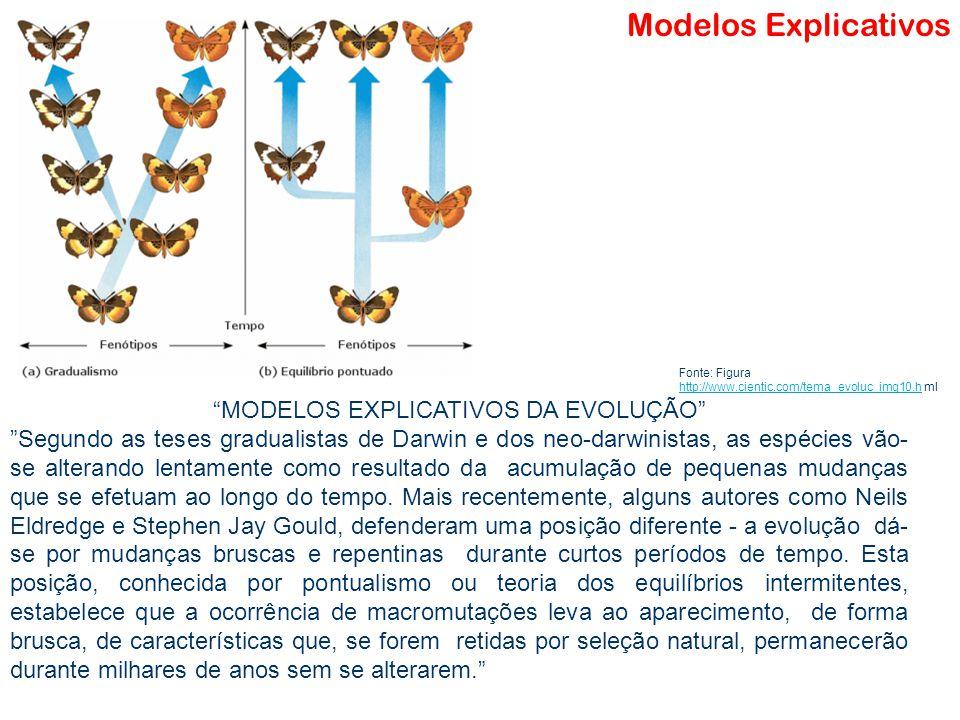 """Modelo Matemático Modelos Explicativos """"MODELOS EXPLICATIVOS DA EVOLUÇÃO"""" """"Segundo as teses gradualistas de Darwin e dos neo-darwinistas, as espécies"""