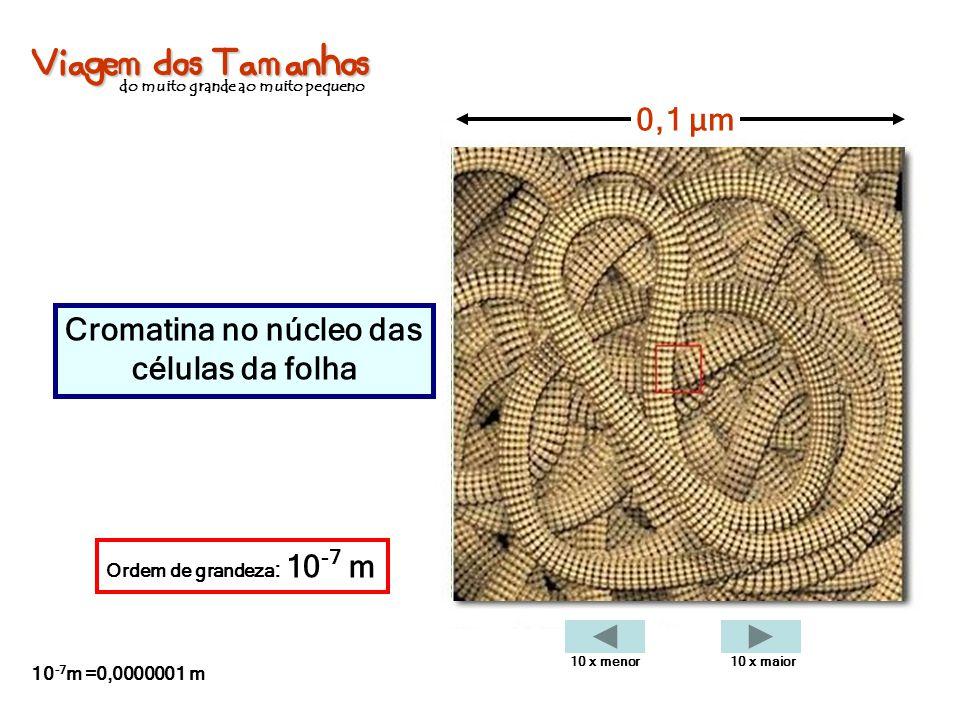 Viagem dos Tamanhos do muito grande ao muito pequeno Cromatina no núcleo das células da folha 0,1 µm Ordem de grandeza : 10 -7 m 10 -7 m =0,0000001 m