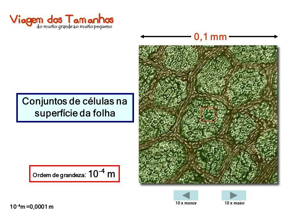 Viagem dos Tamanhos do muito grande ao muito pequeno Conjuntos de células na superfície da folha 0,1 mm Ordem de grandeza : 10 -4 m 10 -4 m =0,0001 m