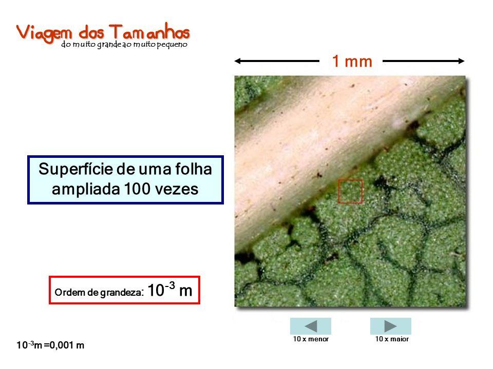 Viagem dos Tamanhos do muito grande ao muito pequeno Superfície de uma folha ampliada 100 vezes 1 mm Ordem de grandeza : 10 -3 m 10 -3 m =0,001 m 10 x