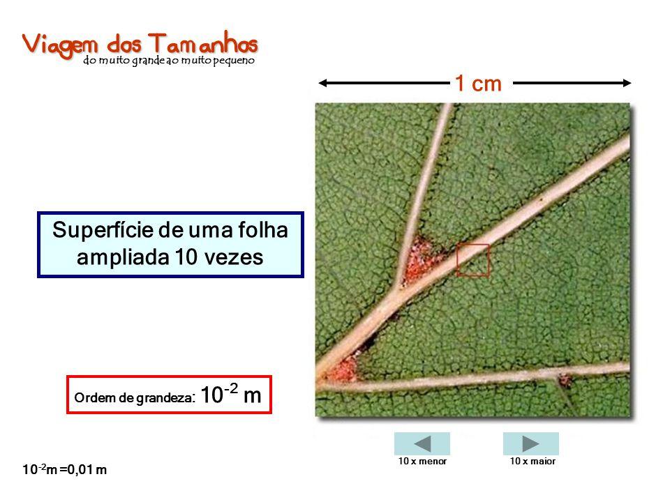Viagem dos Tamanhos do muito grande ao muito pequeno Superfície de uma folha ampliada 10 vezes 1 cm Ordem de grandeza : 10 -2 m 10 -2 m =0,01 m 10 x m