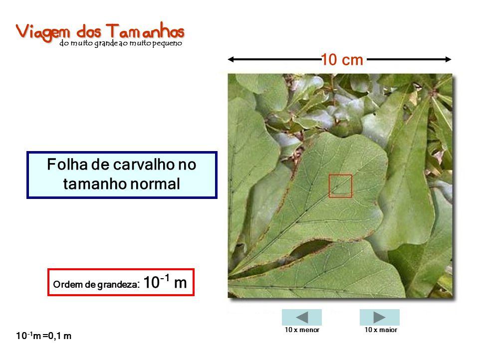 Viagem dos Tamanhos do muito grande ao muito pequeno Folha de carvalho no tamanho normal 10 cm Ordem de grandeza : 10 -1 m 10 -1 m =0,1 m 10 x menor10