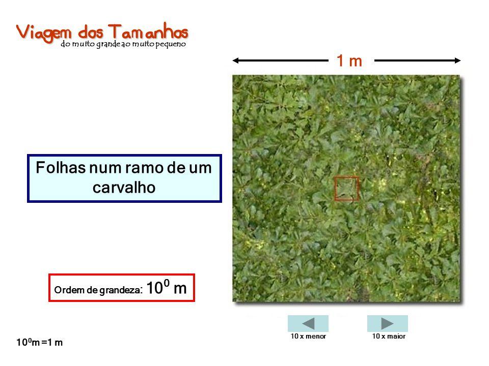 Viagem dos Tamanhos do muito grande ao muito pequeno Folhas num ramo de um carvalho 1 m Ordem de grandeza : 10 0 m 10 0 m =1 m 10 x menor10 x maior
