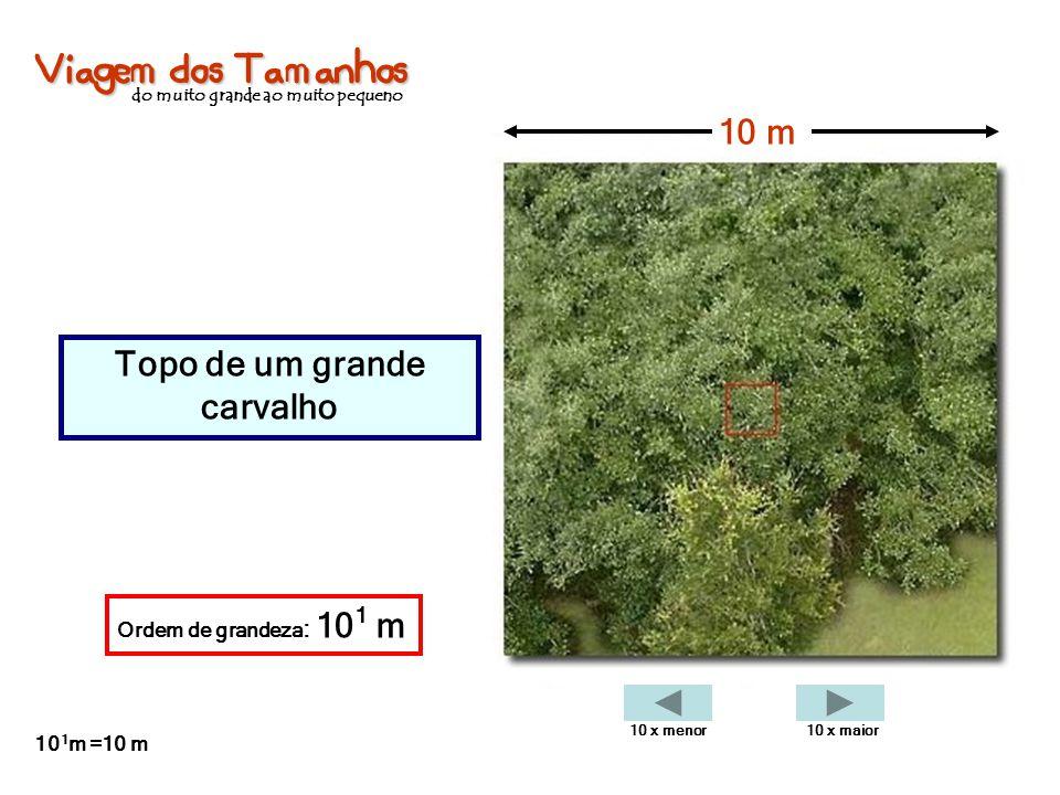 Viagem dos Tamanhos do muito grande ao muito pequeno Topo de um grande carvalho 10 m Ordem de grandeza : 10 1 m 10 1 m =10 m 10 x menor10 x maior