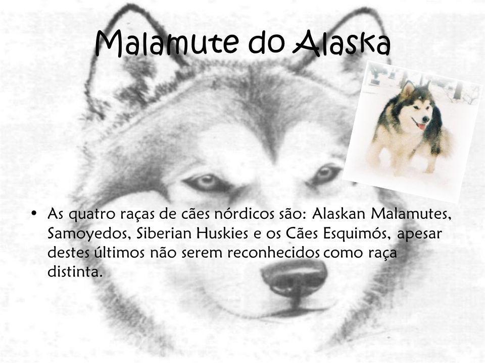Malamute do Alaska