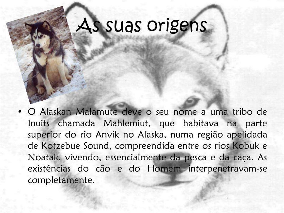 As quatro raças de cães nórdicos são: Alaskan Malamutes, Samoyedos, Siberian Huskies e os Cães Esquimós, apesar destes últimos não serem reconhecidos como raça distinta.