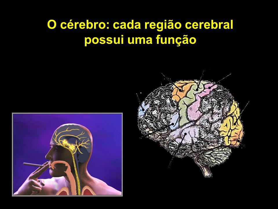 O cérebro: cada região cerebral possui uma função movimentos coordenados movimentos básicos tato associação visual fala audição visão comportamento e