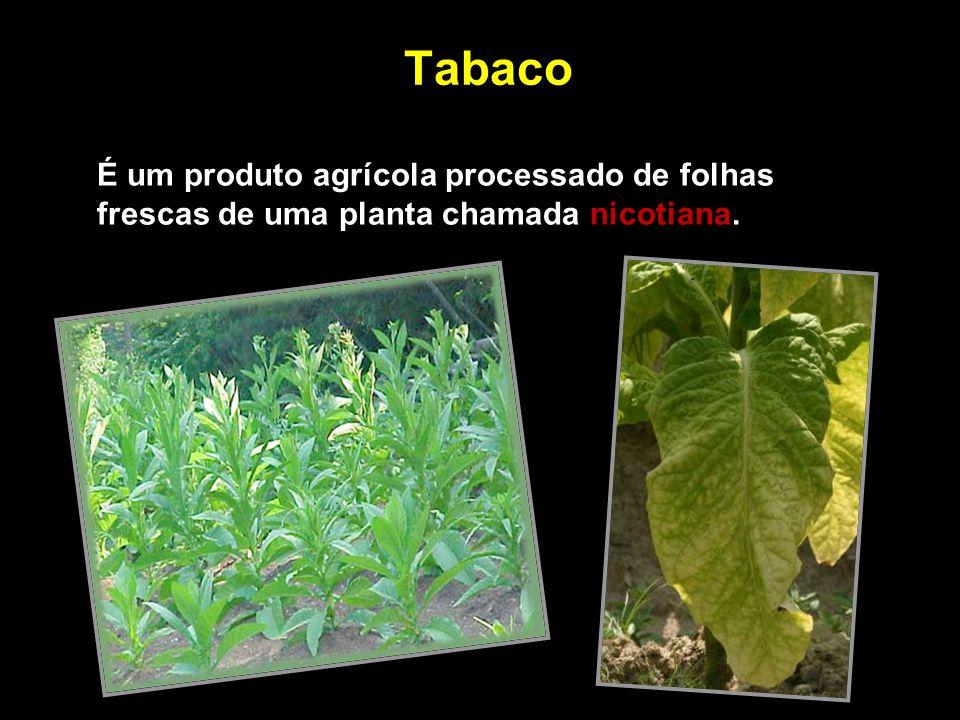Estudos mostram que o tabagismo é responsável por: 200 mil mortes por ano no Brasil (23 pessoas/h).