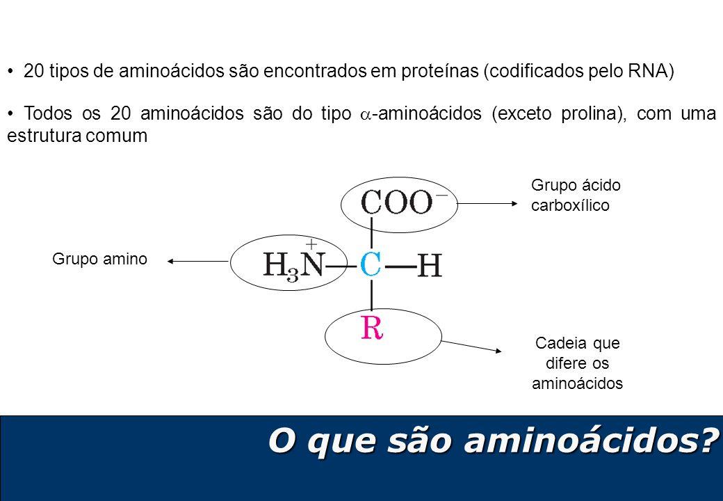 6 Os 20 aminoácidos proteicos Aminoácidos básicos Lisina (Lys – K) Arginina (Arg – R) Histidina (His – H) Aminoácidos ácidos Ácido Aspártico (Asp – D) Ácido Glutâmico (Glu – E) Asparagina (Asn – N) Glutamina (Gln – Q) Serina (Ser – S) Treonina (Thr – T) Aminoácidos polares neutros Aminoácidos hidrofóbicos - apolares Alanina (Ala – A) Valina (Val – V) Isoleucina (Ile – I) Leucina (Leu – L) Metionina (Met – M) Fenilalanina (Phe – F) Tirosina (Tyr – Y) Triptofano (Trp – W) Aminoácidos especiais Cisteína (Cys – C) Glicina (Gly – G) Prolina (Pro – P)