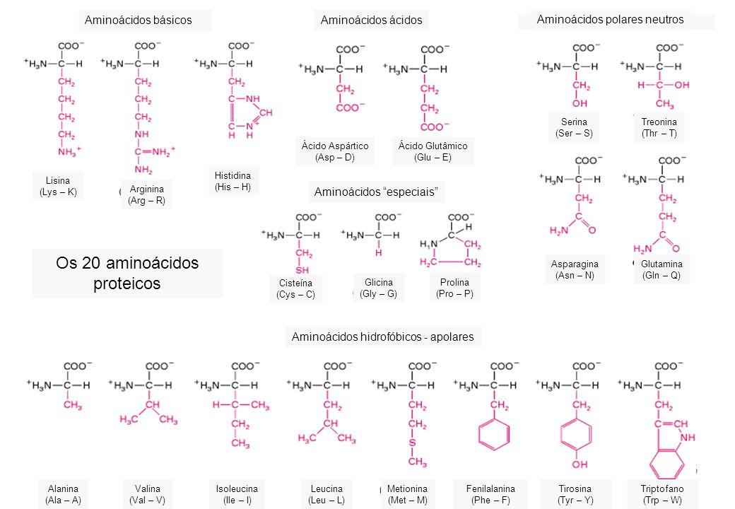 7 Quais são os tipos de aminoácidos? Quais são suas principais fontes?